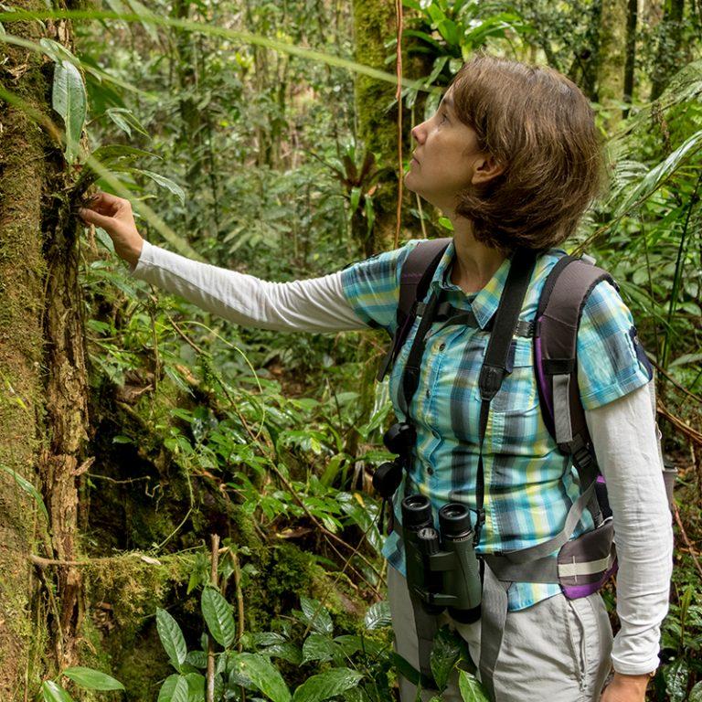 NERC - Saving the Rainforest,Rainforest,Brazil,Cass Productions,Jungle,Video Production,NERC,Awards,Natural Environment Research Council,environmental documentary